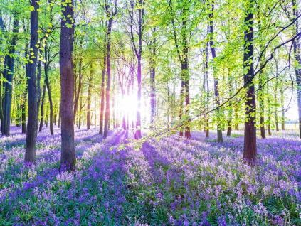 Leinwandbild 80x60cm Wald Natur Lavendel Echtholz Keilrahmen Wanddeko Wandbild