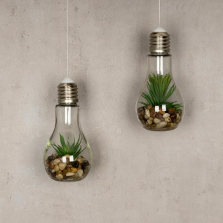 2er Set Sukkulenten Glühbirne Glas je B x H 8 x 19cm Deko LED Lampe Kunstpflanze - Vorschau 2