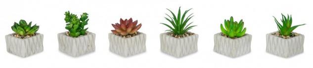 6er Set Fleischpflanzen Sukkulente Kunstpflanze Grün Weiß Kunstblume