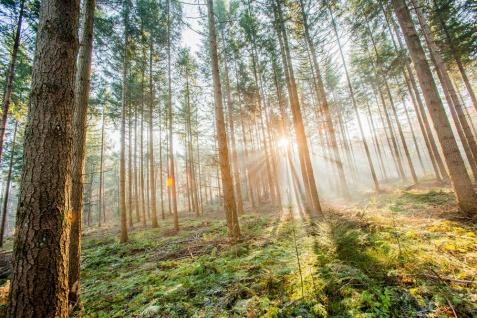 Leinwandbild 80x60cm Wald Natur Landschaft Echtholz Keilrahmen Wanddeko Wandbild