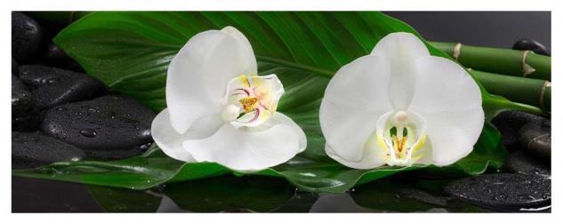 Glasbild 30x80cm Wandbild Aus Glas Orchideen Blume Steine Bambus Deko
