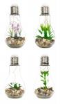 4er Set Sukkulenten Glühbirne Im Glas B x H: 8 x 19 cm LED Warmweiß Pflanze
