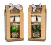 Duftkerze Geschenkset Vanille Lemongras Düfte Kerzen Sukkulenten Deko