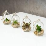 4er Set Sukkulenten B x H 8, 5x12, 5cm Glas Kunstpflanze Grün Kunstblume Deko