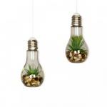 2er Set Sukkulenten Glühbirne Glas je B x H 8 x 19cm Deko LED Lampe Kunstpflanze