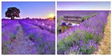 levandeo Glasbild 2er Set je 30x30cm Wandbild Glas Lavendel Feld Sonne Land