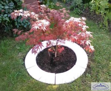 BD-6220 Baumring 6-teilig zur Baumeinfassung oder Einfassung für Garten Strauch 90cm 24kg - Vorschau 4