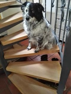 Rutsch Schutz Stufenmatten 15cm breit transp. gummiert selbstklebend Hundesocken