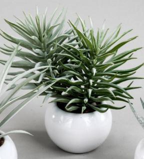 formano Deko Kaktus im Kugeltopf, 12 cm