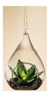 GILDE Dekokaktus Sukkulente im Tropfenglas, 7 x 8 x 11, 5 cm