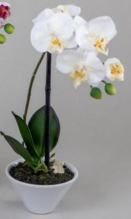 Weiße Orchidee im Porzellantopf, 35 cm - Vorschau