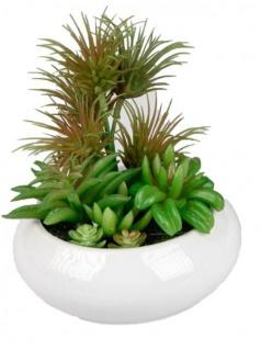Deko Kaktus im weißen Porzellantopf 15 cm