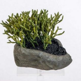 formano Deko Kaktus im grauen Keramiktopf, 15 cm