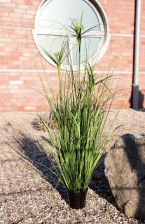 GILDE Deko Gras im Topf Cyperus grün, 101, 5 cm
