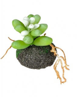 formano Deko Kaktus auf Erdsockel, 8 cm