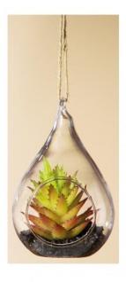 GILDE Sukkulente Dekokaktus im Tropfenglas, orange, 7 x 8 x 11, 5 cm
