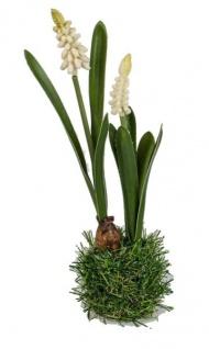 formano Deko Hyazinthe weiß auf Gras Sockel, 26 cm