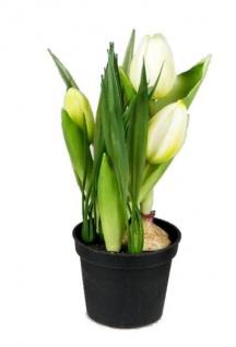 formano Kunstblume Tulpen mit Gräsern im Topf, creme, 20 cm