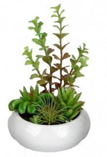 Deko Kaktus in einem weißen Porzellan Topf 15 cm
