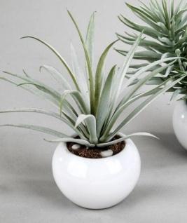 formano Deko Kaktus im weißen Kugel Topf, 12 cm