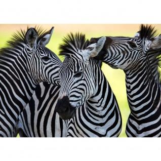 Fototapete Tiere Tapete Zebras Tiere Streifen Muster schwarz - weiß | no. 2555