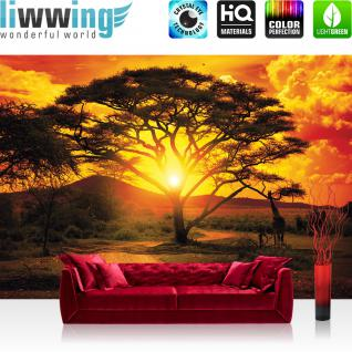 liwwing Vlies Fototapete 400x280 cm PREMIUM PLUS Wand Foto Tapete Wand Bild Vliestapete - Afrika Tapete Sonnenuntergang Baum Weg Giraffe Savanne Himmel Pflanze Afrika gelb - no. 999