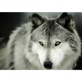 Fototapete Tiere Tapete Wolf natur Augen grün schwarz weiß | no. 2401