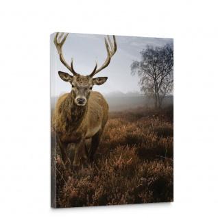 Leinwandbild Wild Hirsch Geweih Rotwild Natur Wiese   no. 5165