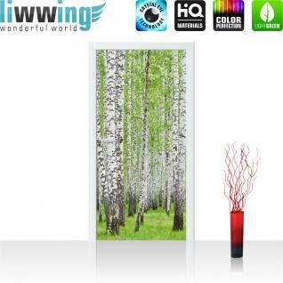 Türtapete - Birke Wald Bäume | no. 433 - Vorschau 2