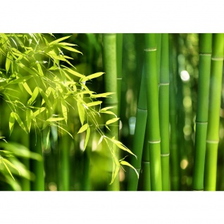 Fototapete Far Asia Bamboo Wald Tapete Bambus Bambuswald Dschungel Asia Asien Bambusweg grün | no. 18