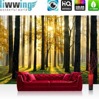 liwwing Vlies Fototapete 300x210 cm PREMIUM PLUS Wand Foto Tapete Wand Bild Vliestapete - SUNLIGHT FOREST ll - Wald Bäume Sonnenstrahlen grün grün Ruhe - no. 062