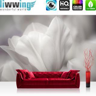 liwwing Vlies Fototapete 400x280 cm PREMIUM PLUS Wand Foto Tapete Wand Bild Vliestapete - WHITE TULIPS - Blumen Tulpen Natur Schwarz Weiss Blumenranke Blumendeko - no. 098
