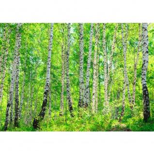 Fototapete Birch Forest Wald Tapete Birkenwald Bäume Wald Sonne Birkenhain Birke Birken Gras Natur Baum grün | no. 7