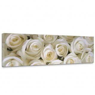 Leinwandbild Blumen Rose Blüten Natur Liebe Love Blüte Weiß | no. 184