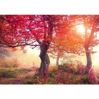 Fototapete Wald Tapete Wald Bäume Natur Baum Sonne grau | no. 242