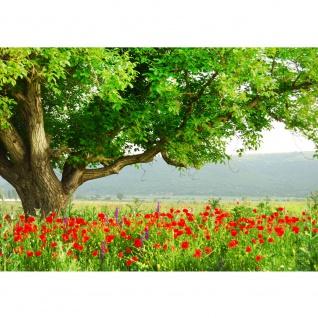 Fototapete A Beautiful Tree Natur Tapete Natur Mohn Feld Baum Wald Bäume rot grün Idyll grün | no. 90