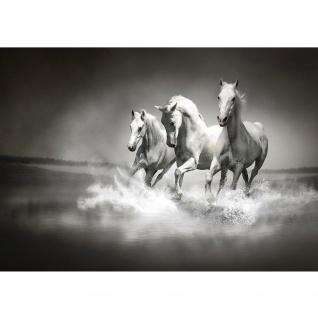 Fototapete Tiere Tapete Pferd Wasser Schimmel Rennpferd schwarz - weiß | no. 1015