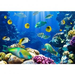 Fototapete Underwater World Tiere Tapete Aquarium Unterwasser Meereswelt Meer Fische Riff Korallenriff blau   no. 33