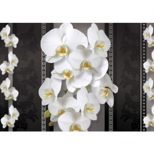 Fototapete Orchideen Tapete Orchidee Blume Blüten schwarz - weiß | no. 1583