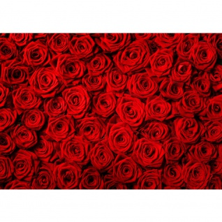 Fototapete Blumen Tapete Blumen Rose Blüten Natur Liebe Love Blüte Rot rosa | no. 190