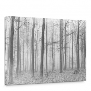 Leinwandbild Wald Baum Nebel   no. 4433