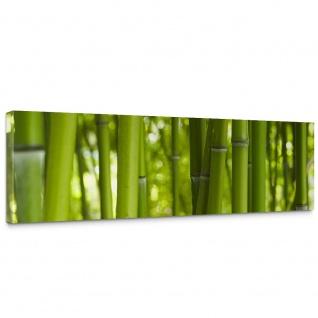 Leinwandbild Dream of Bamboo Bambus Wald Jungle Dschungel Natur Baum Gras | no. 71