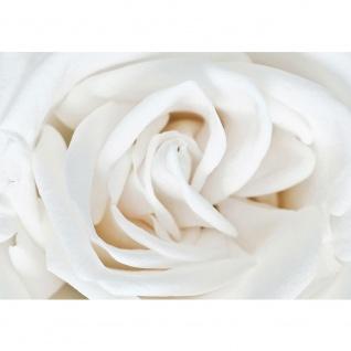 Fototapete Blumen Tapete Rose Blume Blüte Pflanze Liebe weiß   no. 2307