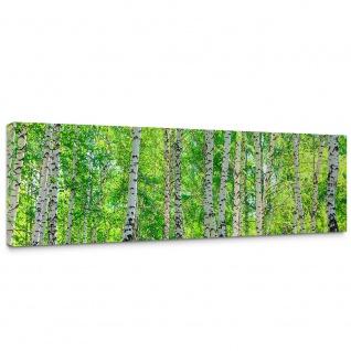 Leinwandbild Birch Forest Birkenwald Bäume Wald SonneBirken Gras Natur Baum | no. 7