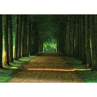 Fototapete Wald Tapete Wals Bäume Laub Weg Allee Herbst grün   no. 2986