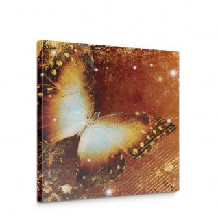 Leinwandbild Ornamente Schmetterling   no. 460