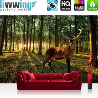 liwwing Vlies Fototapete 350x245 cm PREMIUM PLUS Wand Foto Tapete Wand Bild Vliestapete - Wald Tapete Wald Bäume Sonnenaufgang Schatten Hirsch Wiese Geweih grün - no. 928
