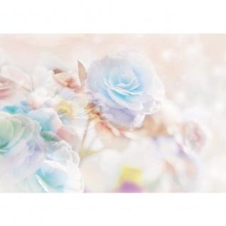 Fototapete Blumen Tapete Rose Blumen Pflanzen bunt | no. 1866