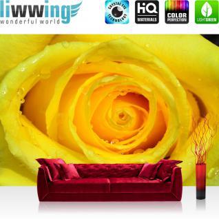 liwwing Fototapete 254x168 cm PREMIUM Wand Foto Tapete Wand Bild Papiertapete - Blumen Tapete Rose Blume Blüte Tropfen Wassertropfen Liebe gelb - no. 1934