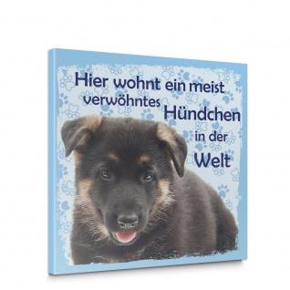 Leinwandbild Schäferhund Haustiere Hunde Tiere   no. 5485